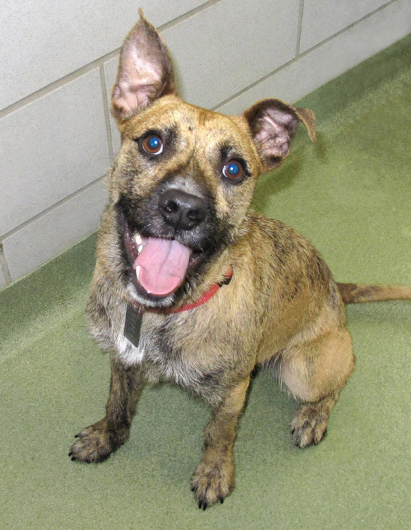 Pet of the Week: Brian | Dallas Voice