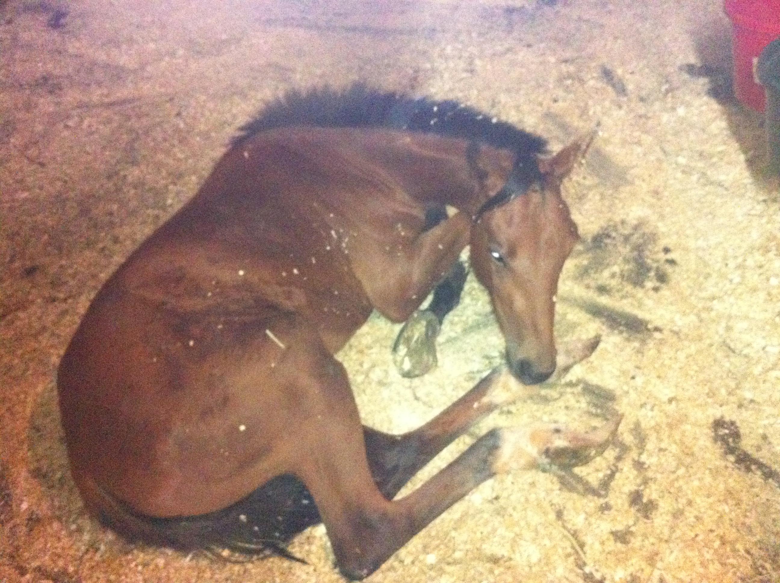 PHOTOS: Gay-run Ranch Hand Rescue receives 6 beaten and neglected horses