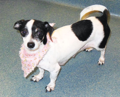 Pet of the week • 11.02.12