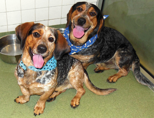 Pets of the week • 12.28.12