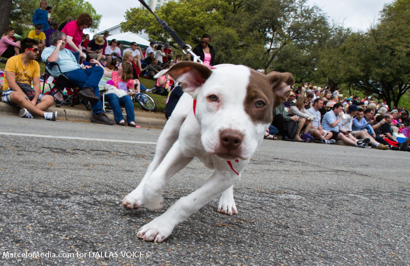 Scenes from Easter in the Park, Pooch Parade
