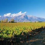 Don-Melchor-vineyards