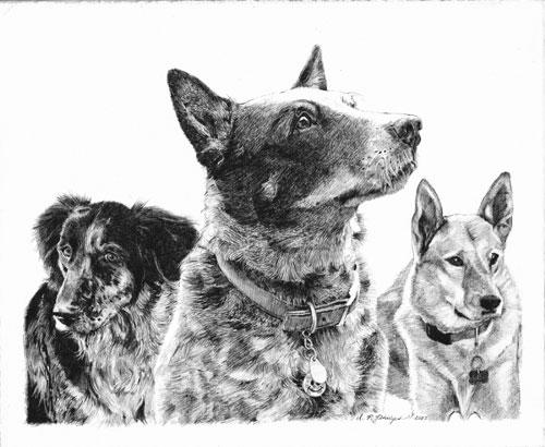 Bontley-dogs