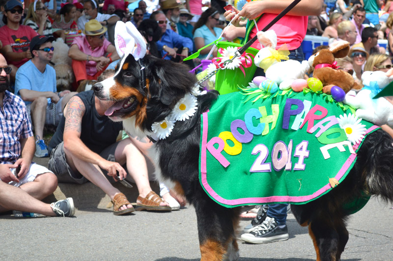 Pooches steal hearts in parade