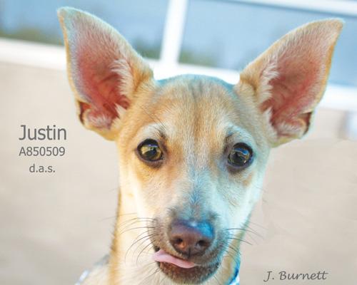 850509-Justin