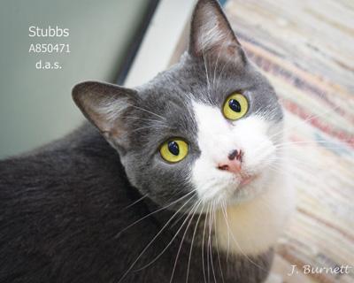 Pet--Stubbs