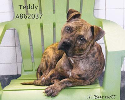 862037-Teddy