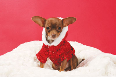 Holiday Gift Guide 2014: Barks and Wags