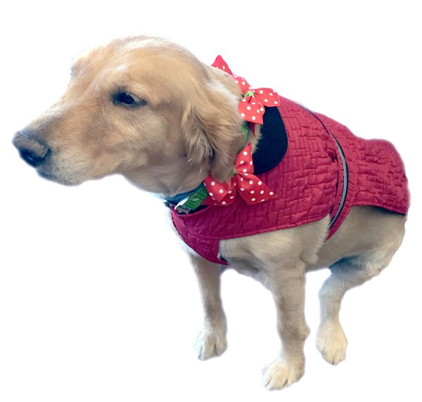 Petrageous Quilted Christmas Jacket