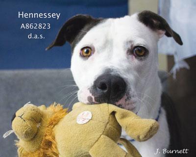 862823-Hennessey