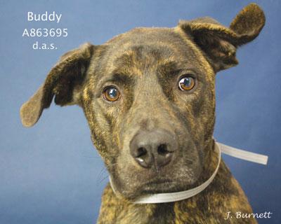 863695-Buddy