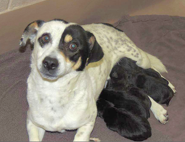 Mama Trinity and her pups need a helping hand, and you can get beautiful art!