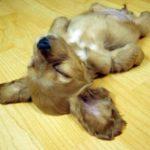 cute-puppy5-400x284