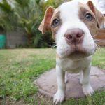 puppy-140306_640