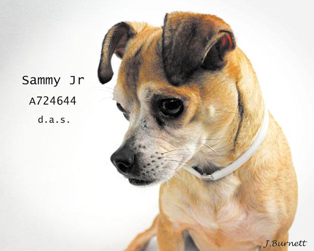 724644-Sammy-Jr-2