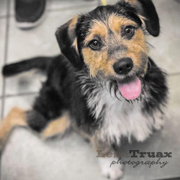 Pet of the week • 07-03-15