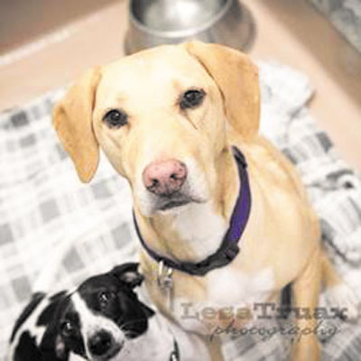 Pets of the week • 10-23-15