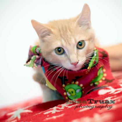 Pet of the week • 12-11-15
