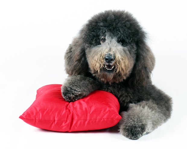 Max-red-pillow-1-03-15