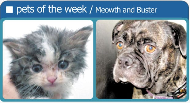 Pets-of-the-week