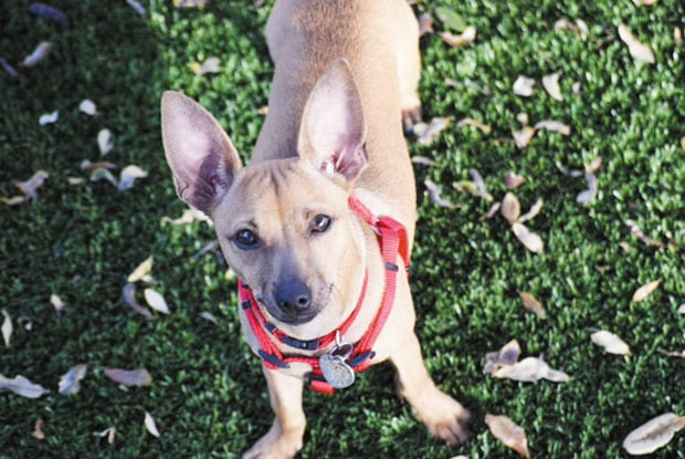 Pets of the Week • 01-20-17