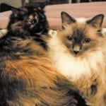 Ann's-girls,-Lyra-and-Nellie