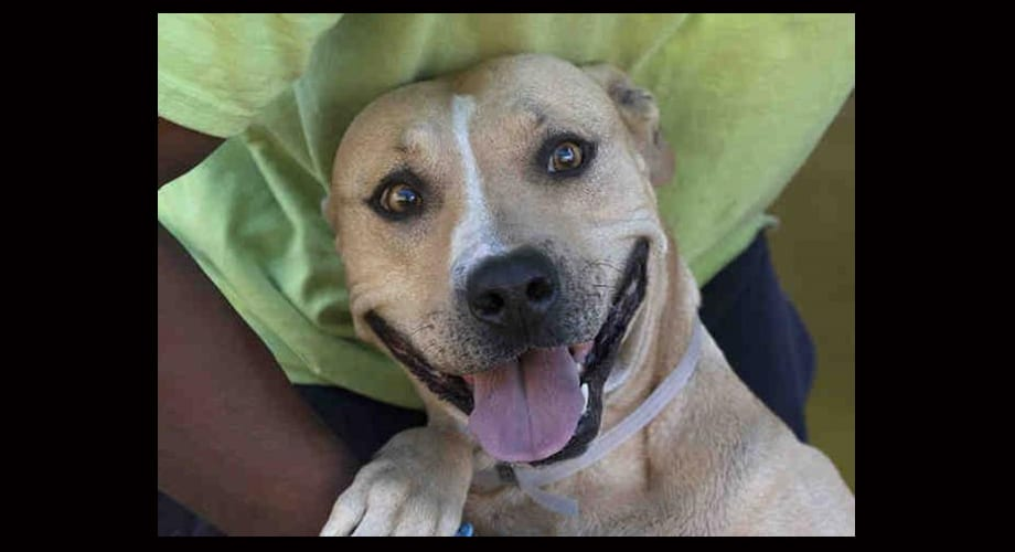 Dallas Animal Services at capacity, adoption fees waived