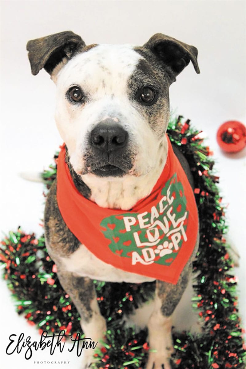 Pet of the week • 12-15-17