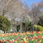 Dallas Arboretum will reopen under new conditions
