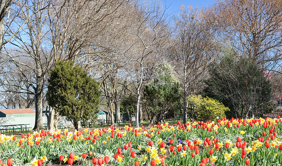 Dallas Arboretum will reopen under new conditions