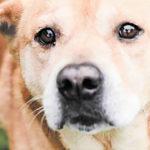 Pet of the week • Winnie • 05-29-20