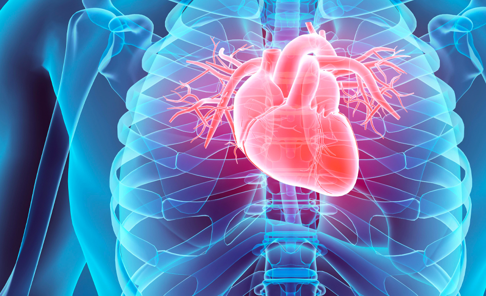 German studies indicate COVID could have a lasting impact on patients' hearts