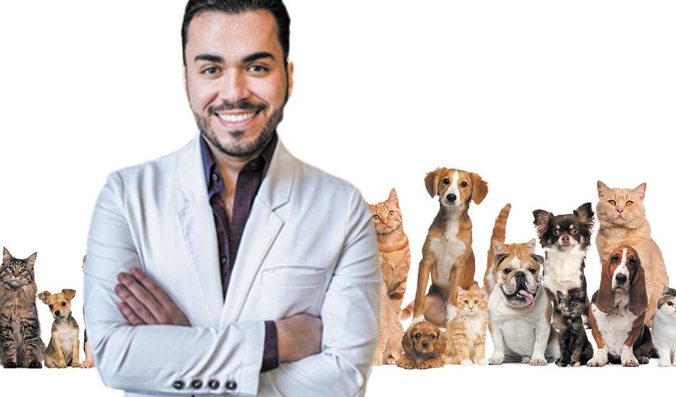 Dr Josh: Watching your pet's waistline