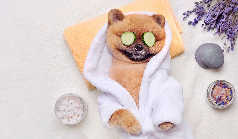 Most pampered pooches